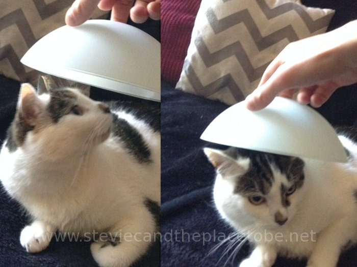 Smudge the Cat looking very intrigued yet unimpressed by his new hat
