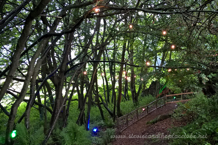 audiowave supplied a complete package for a secret garden party/rave: festoon harnesses and LED coloured flood-lights for the forest pathway